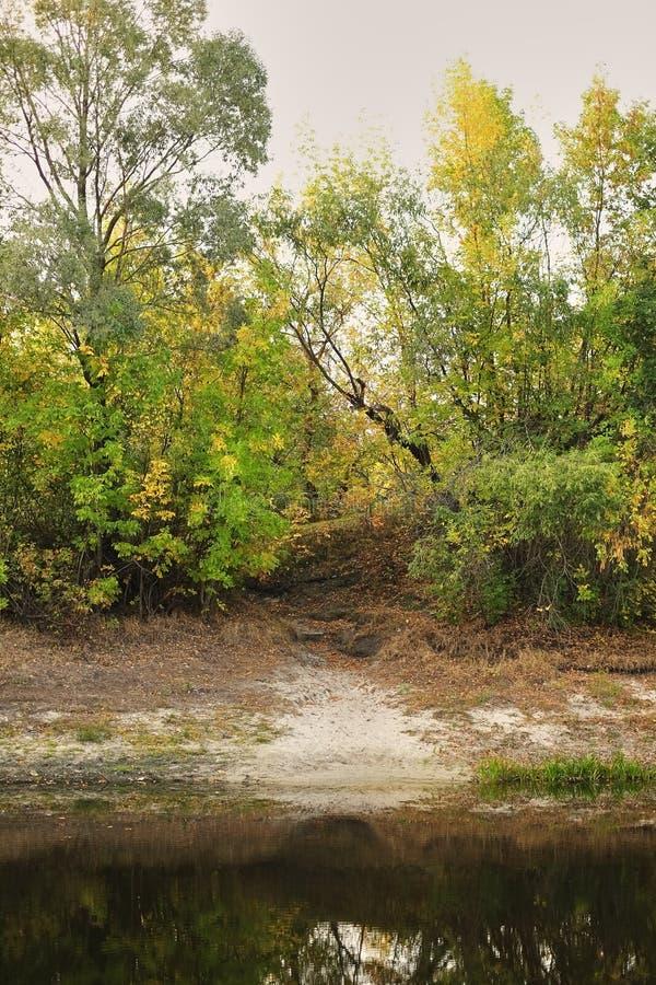 Riva del lago con la foresta di autunno di conifero e delle latifoglie con la riflessione nell'acqua Le betulle sono gialle ed ar immagini stock