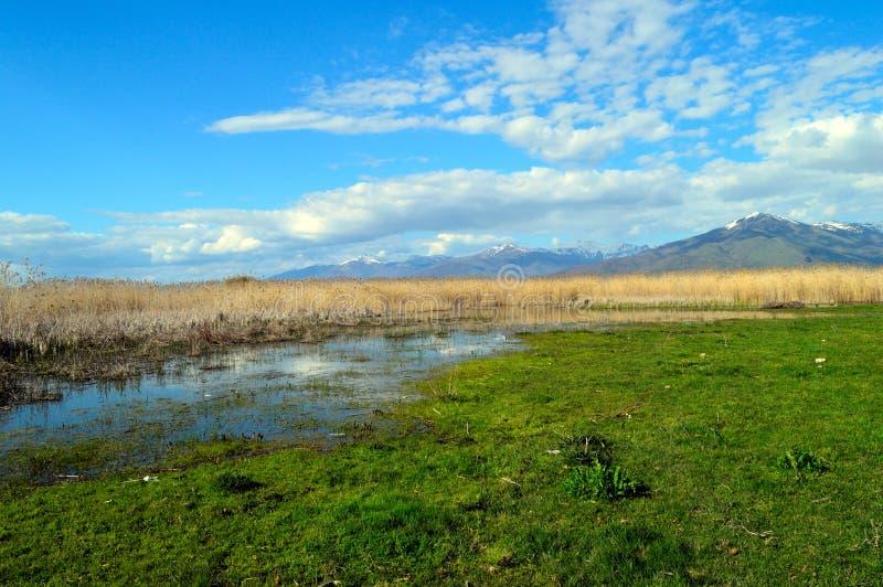 Riva del lago in primavera fotografia stock