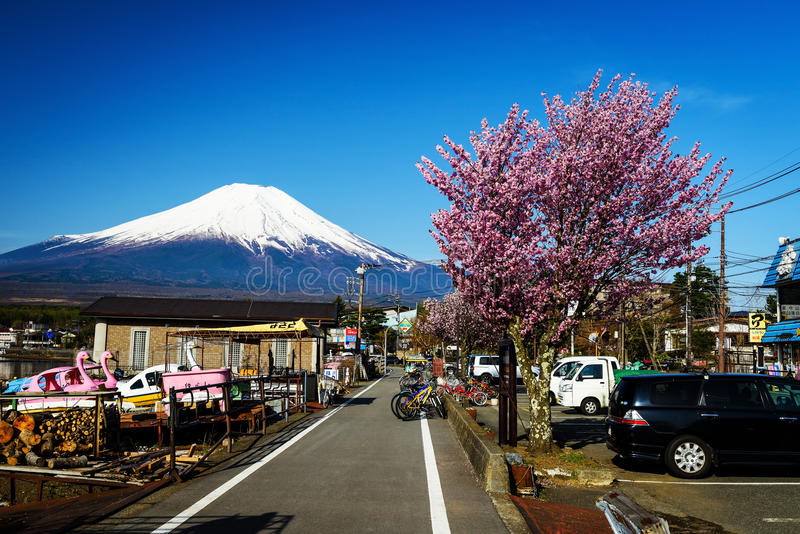 Riva del lago Yamanaka con sakura rosa immagini stock