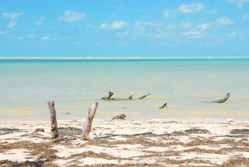 Riva di mar dei Caraibi dell'isola di Holbox fotografia stock