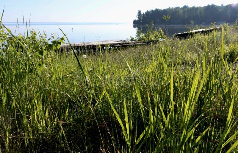 Riva erbosa del lago fotografia stock
