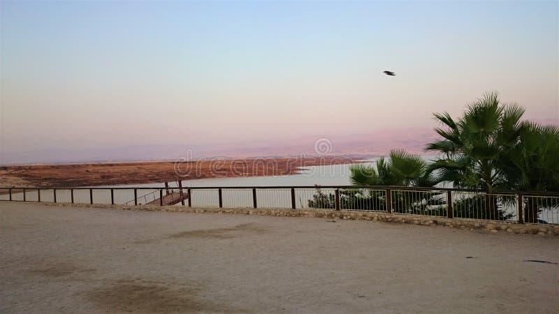 Riva salata del mar Morto Natura selvaggia Paesaggio tropicale summertime immagini stock