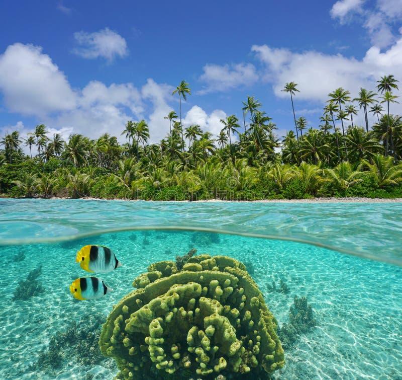 Riva tropicale con corallo e pesce subacqueo fotografie stock libere da diritti