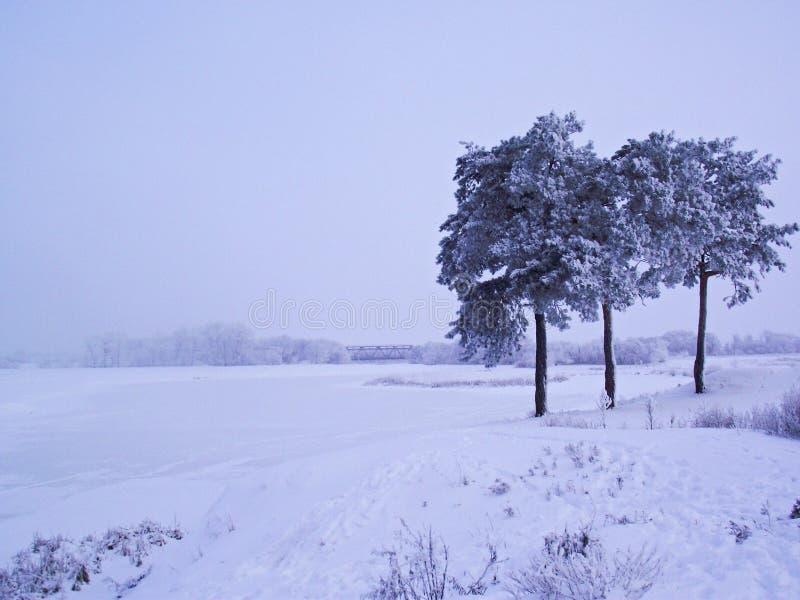 Rivage d'hiver de rivière photo libre de droits