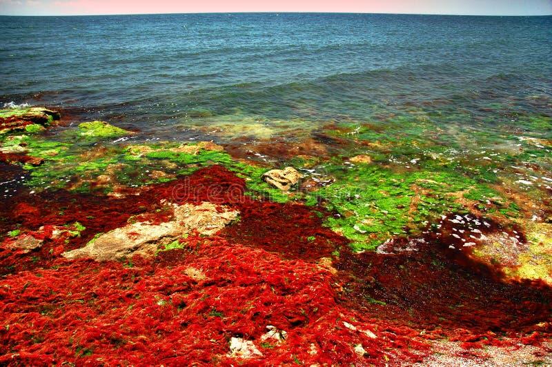 Rivage de la Mer Noire en couleurs #6 photo libre de droits
