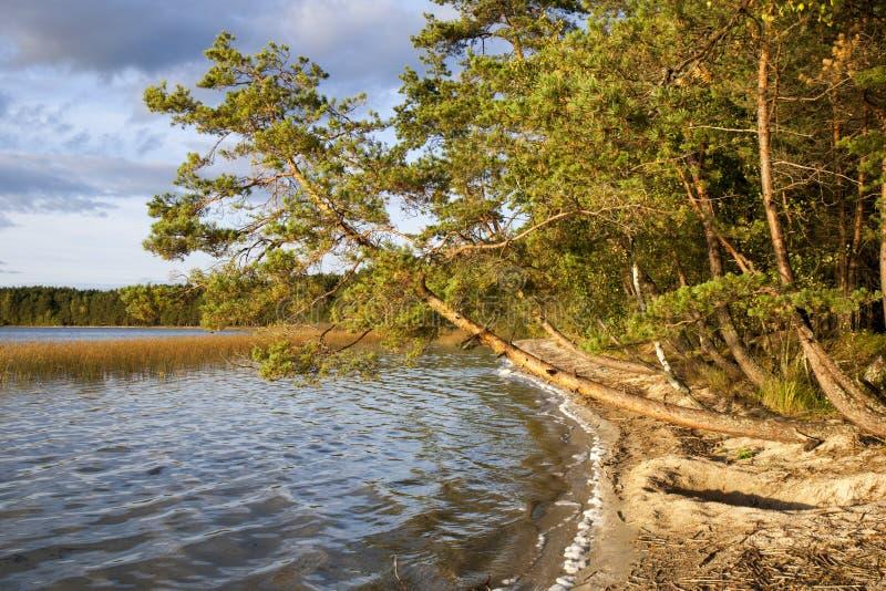Rivage de lac evening photographie stock