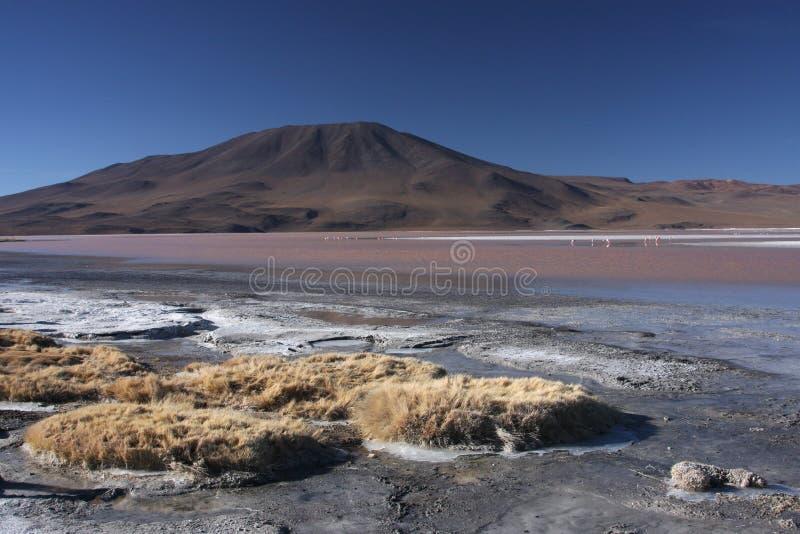 Rivage de Laguna Colorada photo libre de droits