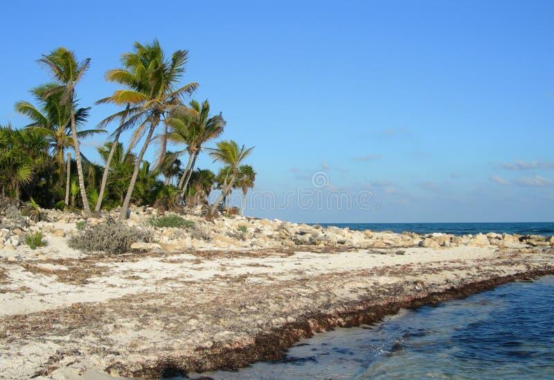 rivage de mer des Caraïbes de paumes images stock
