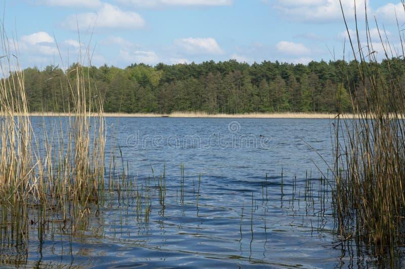 Rivage du lac un jour ensoleillé image stock