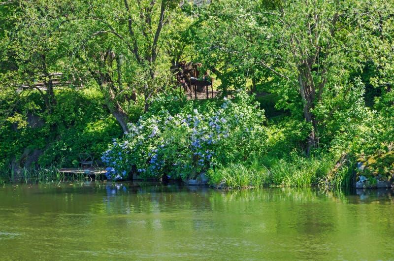Rivage envahi d'étang images stock
