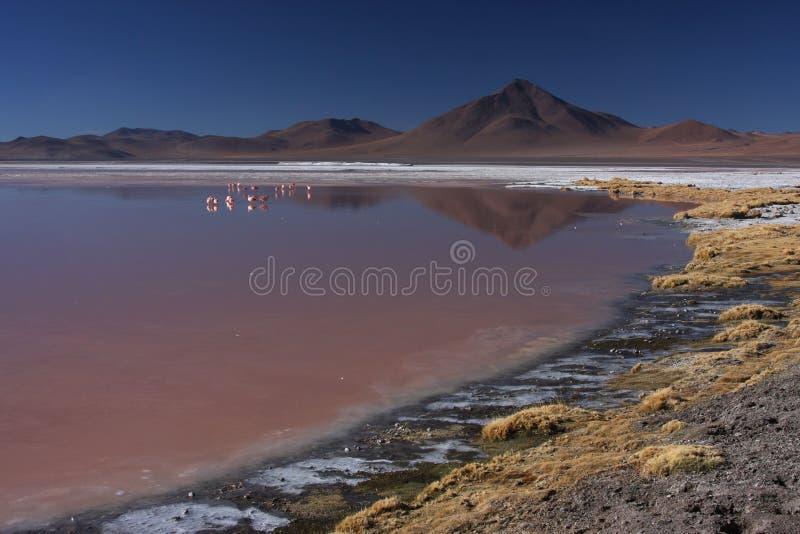 Rivage et flamants de Laguna Colorada photos libres de droits