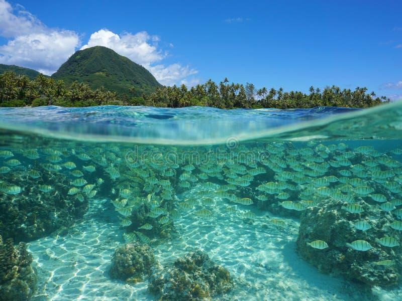 Rivage tropical dédoublé avec l'eau du fond d'école de poissons photo libre de droits