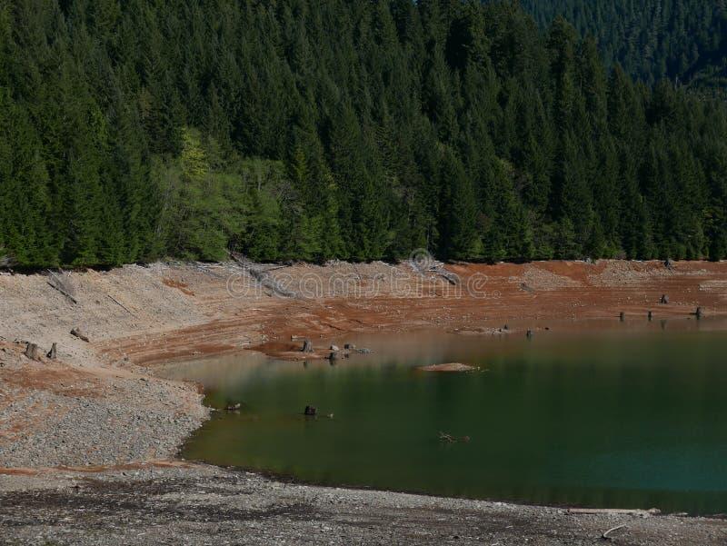 Rivages de lac à la forêt photos stock