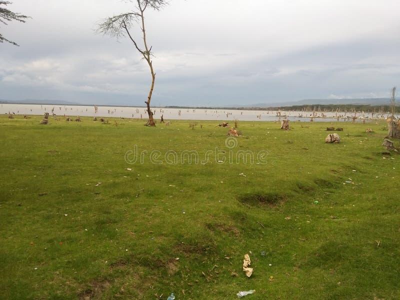 Rivages de lac Naivasha photo libre de droits