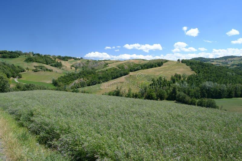 Rivalta Di Lesignano Parma, Włochy: lato krajobraz obrazy stock