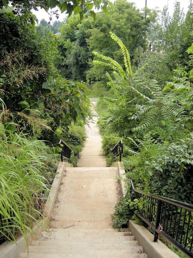 Download Rivanna Trail 1 stock image. Image of foliage, rivanna - 10476445