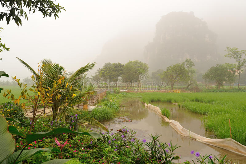 Ricefields and the limestone mountains in the early morning stock image