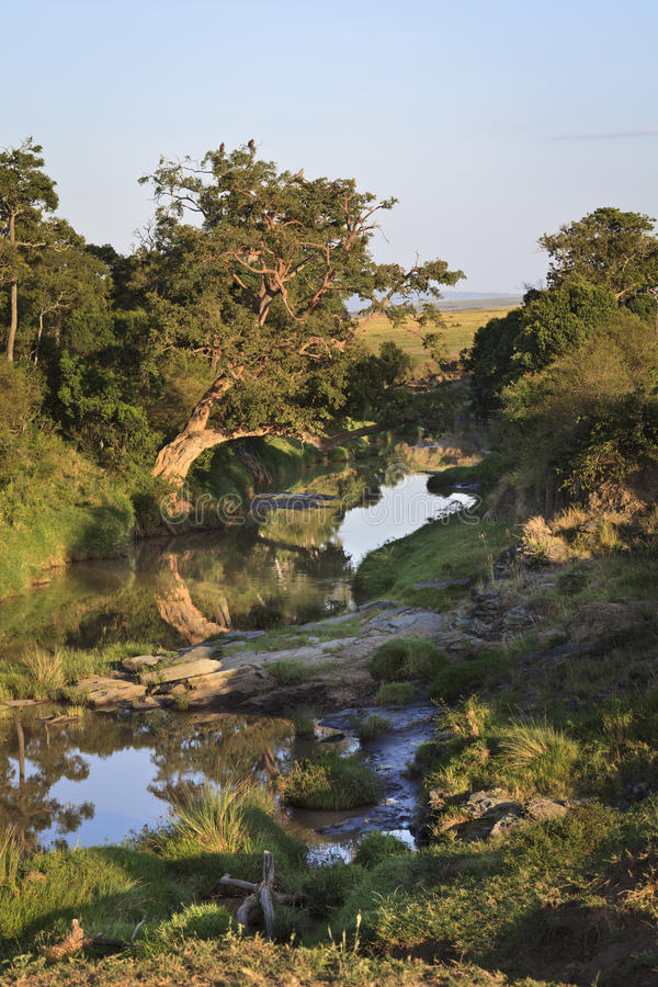 Download At the River stock image. Image of eastern, maasai, outdoors - 23382319