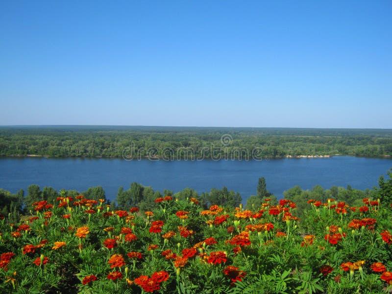 Download River stock image. Image of reserve, river, ukraine, flowers - 23514409