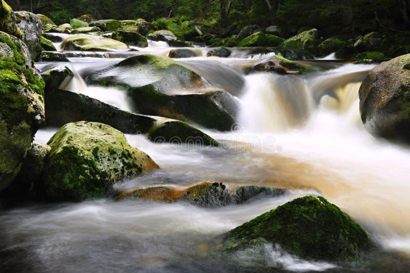 Download River stock photo. Image of plant, creek, peace, rainforest - 26646552