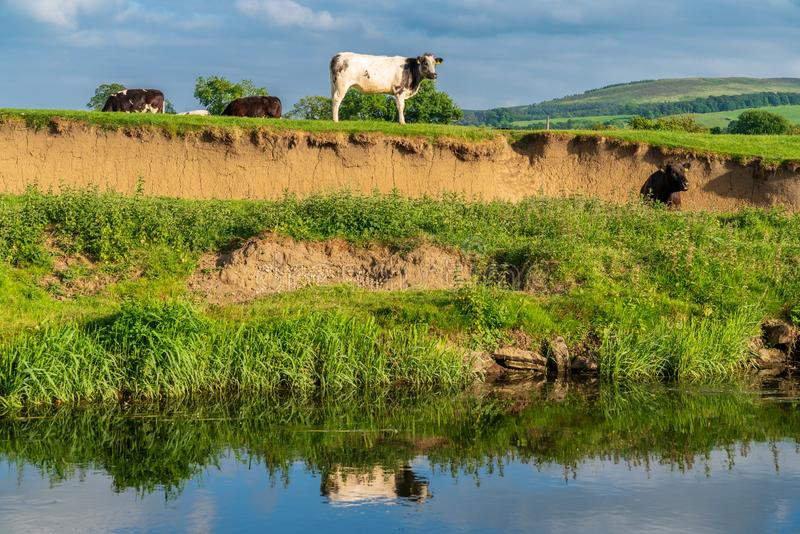 River Aire, near Skipton, North Yorkshire, England, UK stock images
