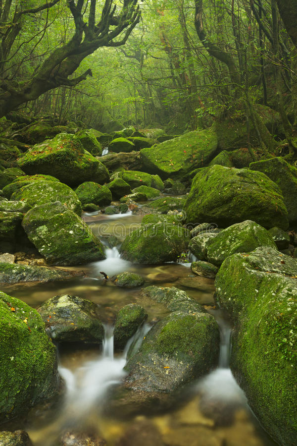 River along Shiratani Unsuikyo trail on Yakushima, Japan stock images