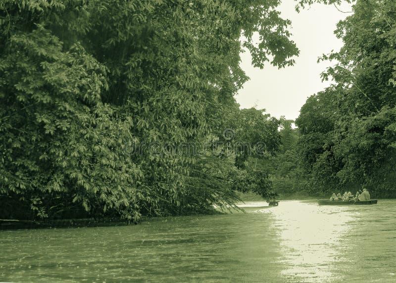 River at Amazonia at Puyo, Ecuador stock image