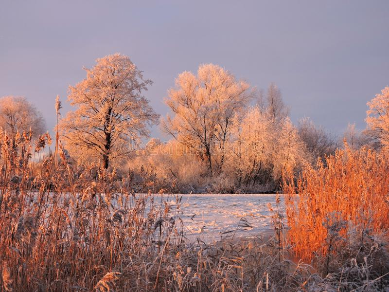 Trees, reed and river Atmata in winter, Lithuania royalty free stock photos