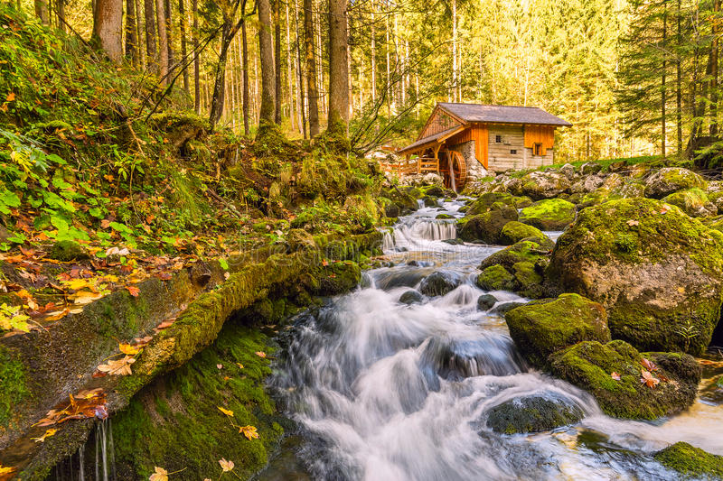 River in Autumn Forest. Small river in autumn forest, beautiful landscape stock image