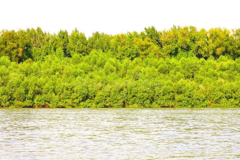 Download River bank stock photo. Image of coastline, plants, bank - 13771792