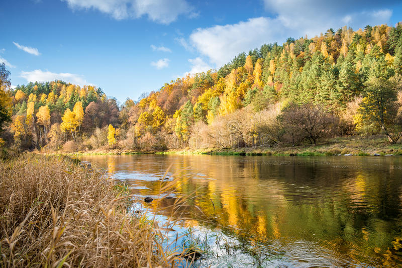 River bank in fall stock photography