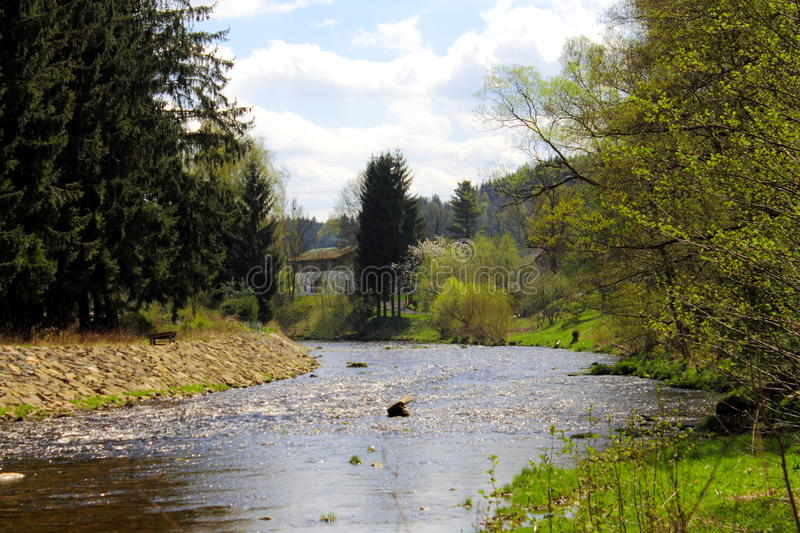 River in the beautifull spring forest. royalty free stock photography