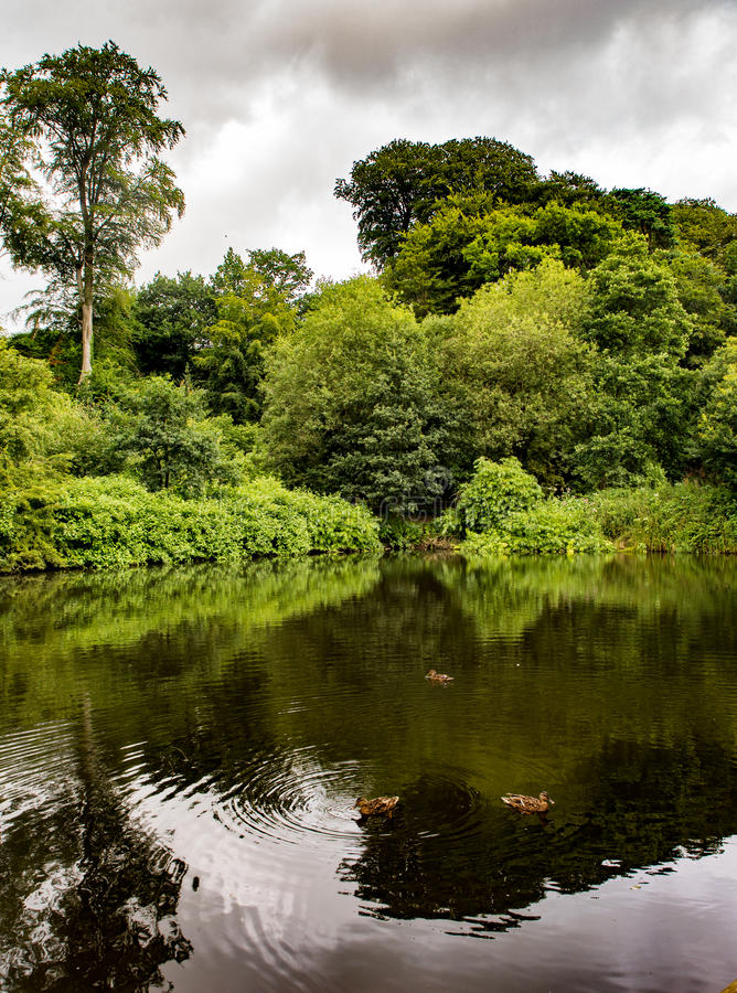 River bollin. The river Bollin running through Styal woods, Styal, Cheshire, UK stock image