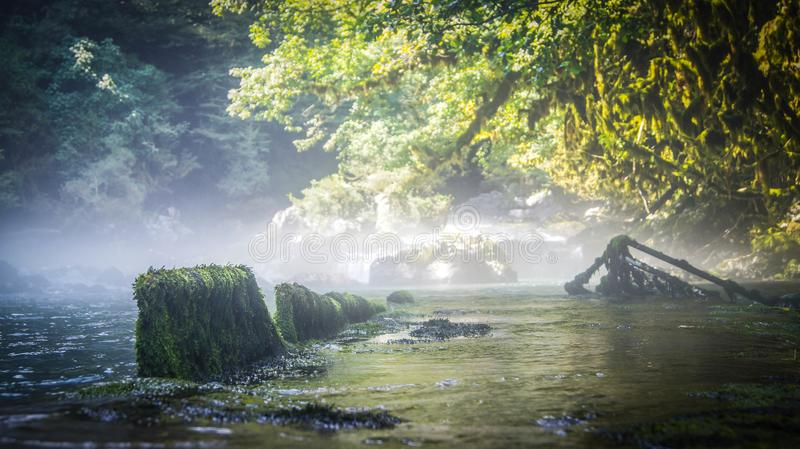 River in boxwood forest in Abkhazia royalty free stock image