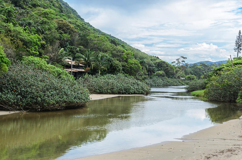 River with a brackish water that passes by the side of a mountain. And flows into Matadeiro Beach in Florianopolis, Brazil royalty free stock photo