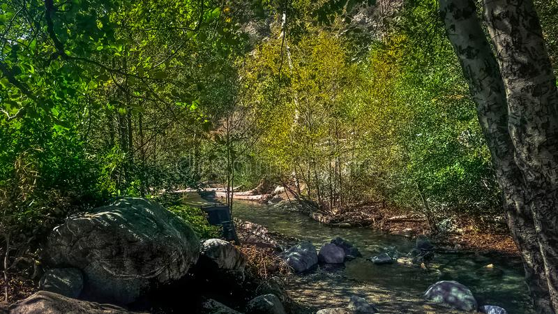 River with bright green leaves stock image