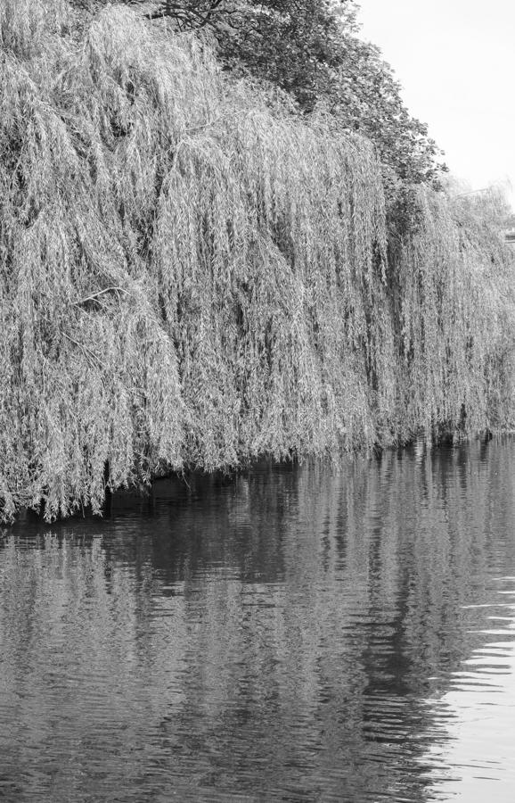 River Cam in Cambridge in black and white royalty free stock photo
