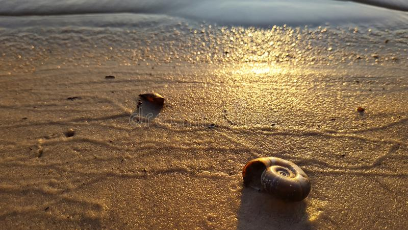 River clam shell on the wet  river sand background. The landscape of riverbank and beach under the hot sun with shell close-up. Sunset on the river beach royalty free stock photos