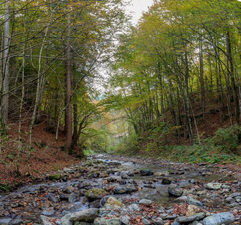 River with clear water. River in autumn in the middle of the woods stock image