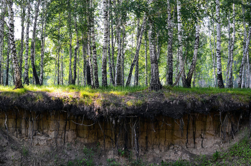 Download River cliff stock image. Image of roots, nature, clay - 26541647