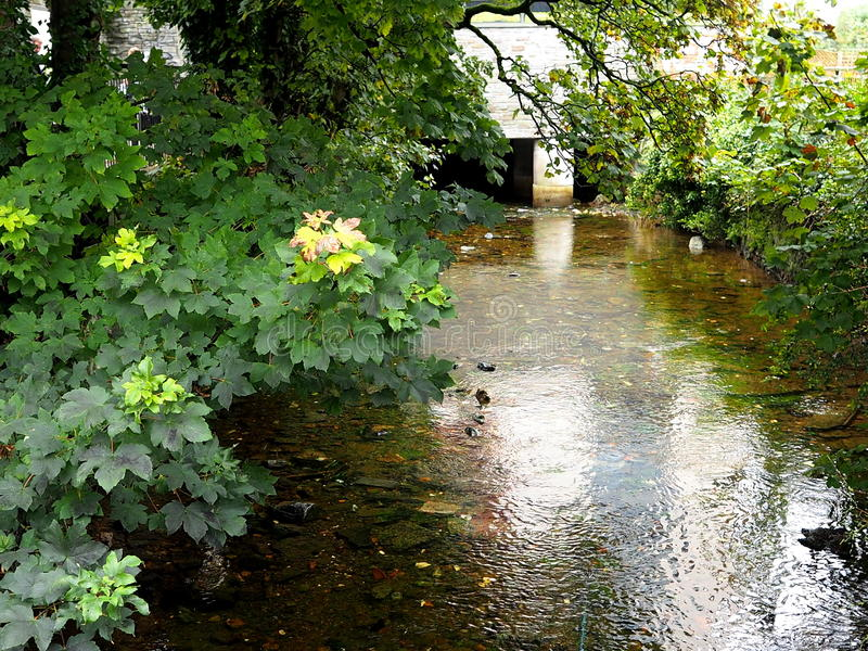 River Corrib In Galway Ireland. River Corrib with trees and shrubs in Galway Ireland stock photos