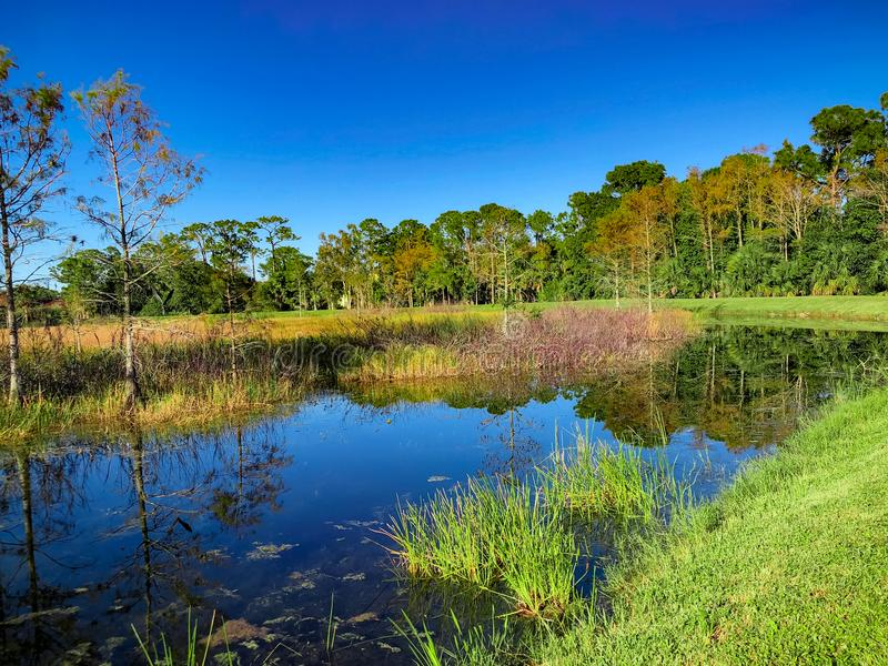 curved river in marsh royalty free stock photos