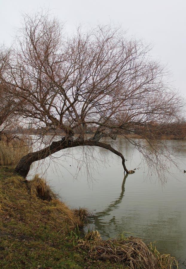 River Danube in winter. Near Budapest, Hungary stock photos