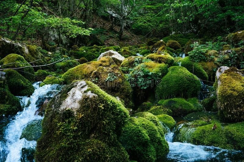 River deep in jungle forest. Nature composition. Mountain stream among the mossy stones. Beautiful river`s Flow shot with Slow. Speed or Long Exposure royalty free stock image