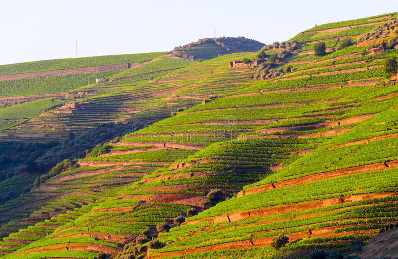 River Douro valley, Portugal. Vineyard hills in the river Douro valley, Portugal royalty free stock photo