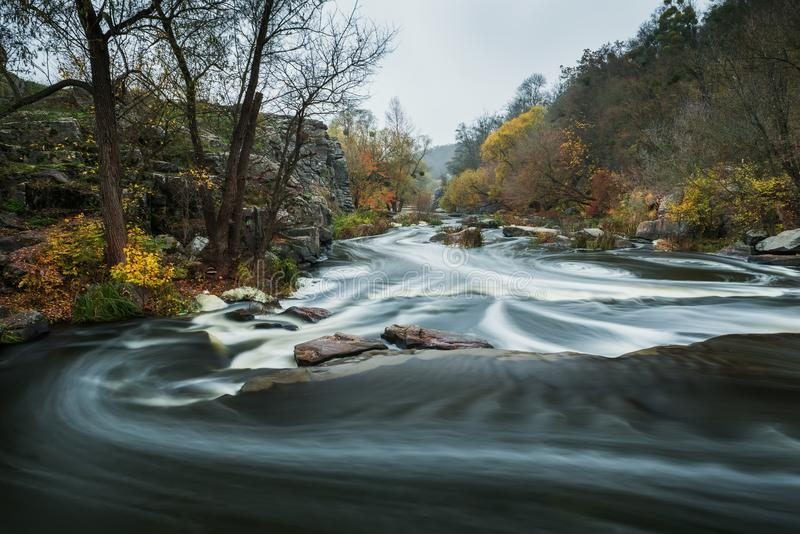 The river is fast with stony shores and autumnal yellow trees. Autumn view of the river. royalty free stock images