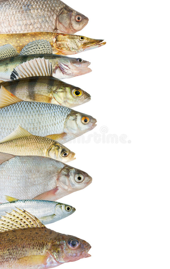 River fish background stock images