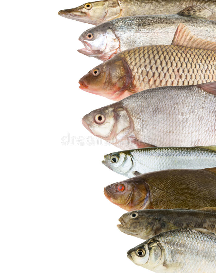 River fish background stock photos
