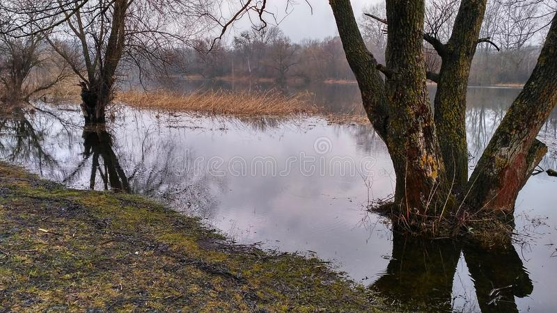 A river for fishing in nature. stock photos