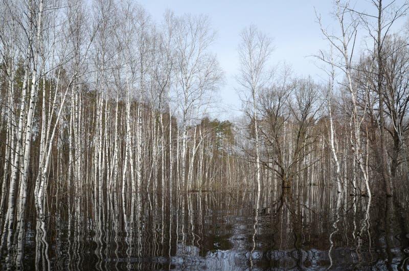 River flood in spring stock photos